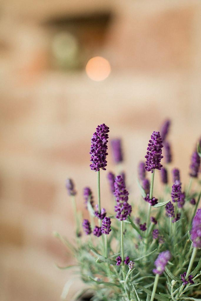 hochzeitsdekoration-lavendel